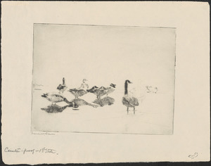 Wild geese resting