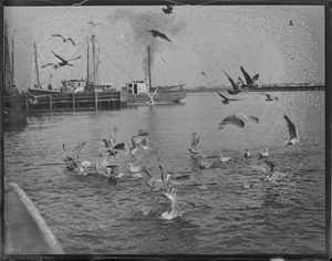 Sea gulls hovering near fishing boats at dock