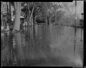 Water level among woods and homes